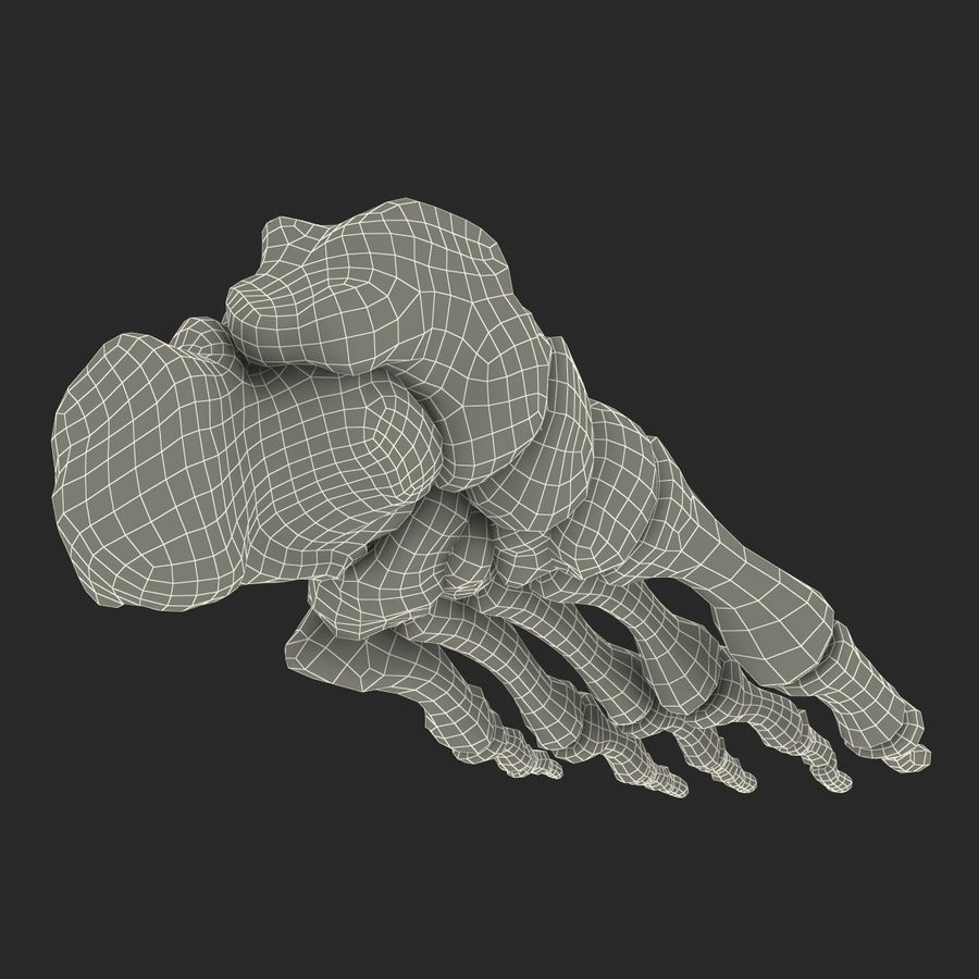 Human Foot Bones royalty-free 3d model - Preview no. 21