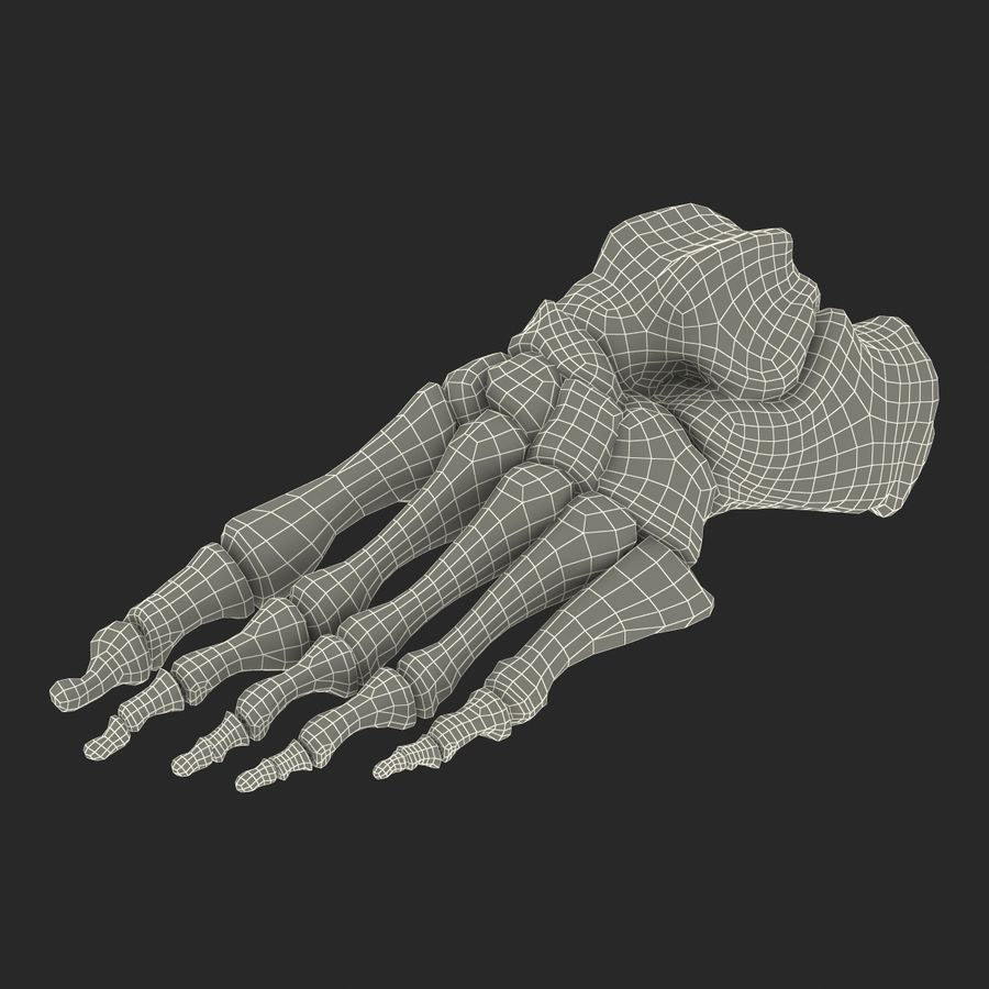 Human Foot Bones royalty-free 3d model - Preview no. 20