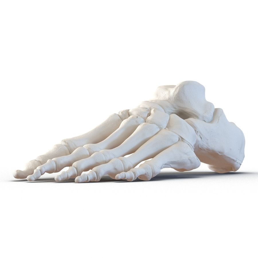 Human Foot Bones royalty-free 3d model - Preview no. 7