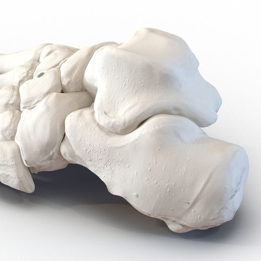 Human Foot Bones royalty-free 3d model - Preview no. 13
