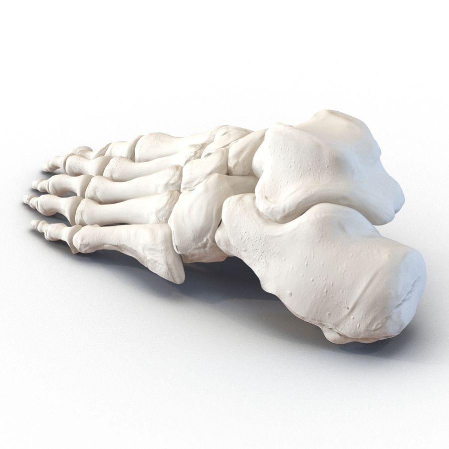 Human Foot Bones royalty-free 3d model - Preview no. 6