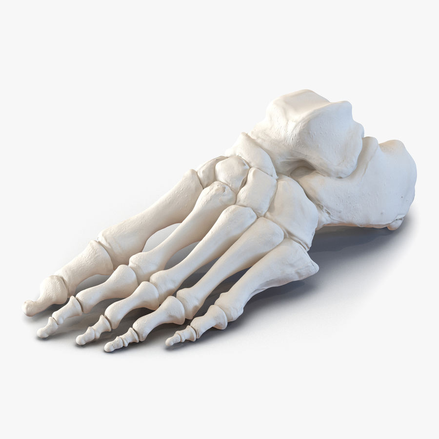 Human Foot Bones royalty-free 3d model - Preview no. 1