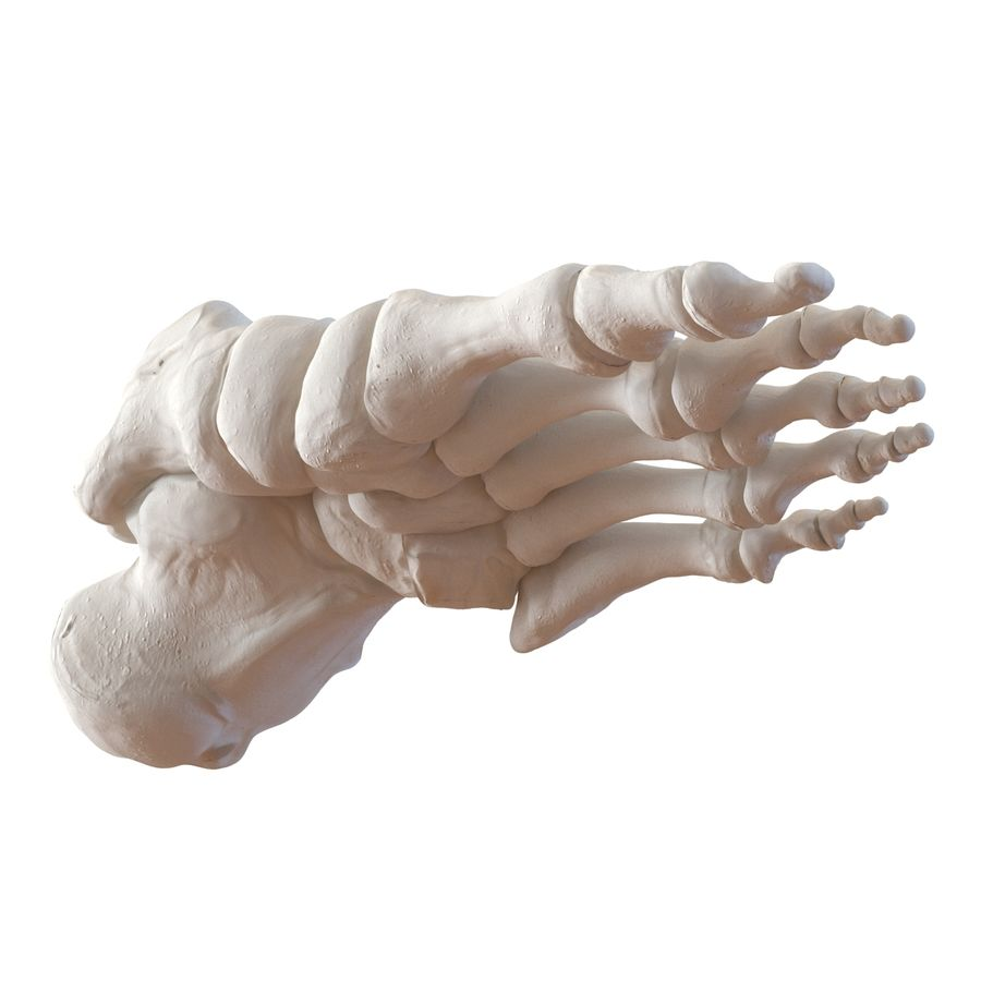 Human Foot Bones royalty-free 3d model - Preview no. 9