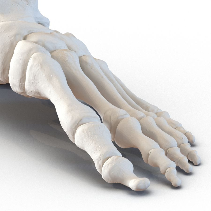 Human Foot Bones royalty-free 3d model - Preview no. 12