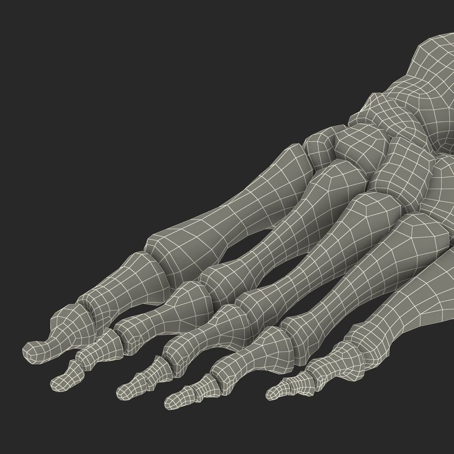 Human Foot Bones royalty-free 3d model - Preview no. 22
