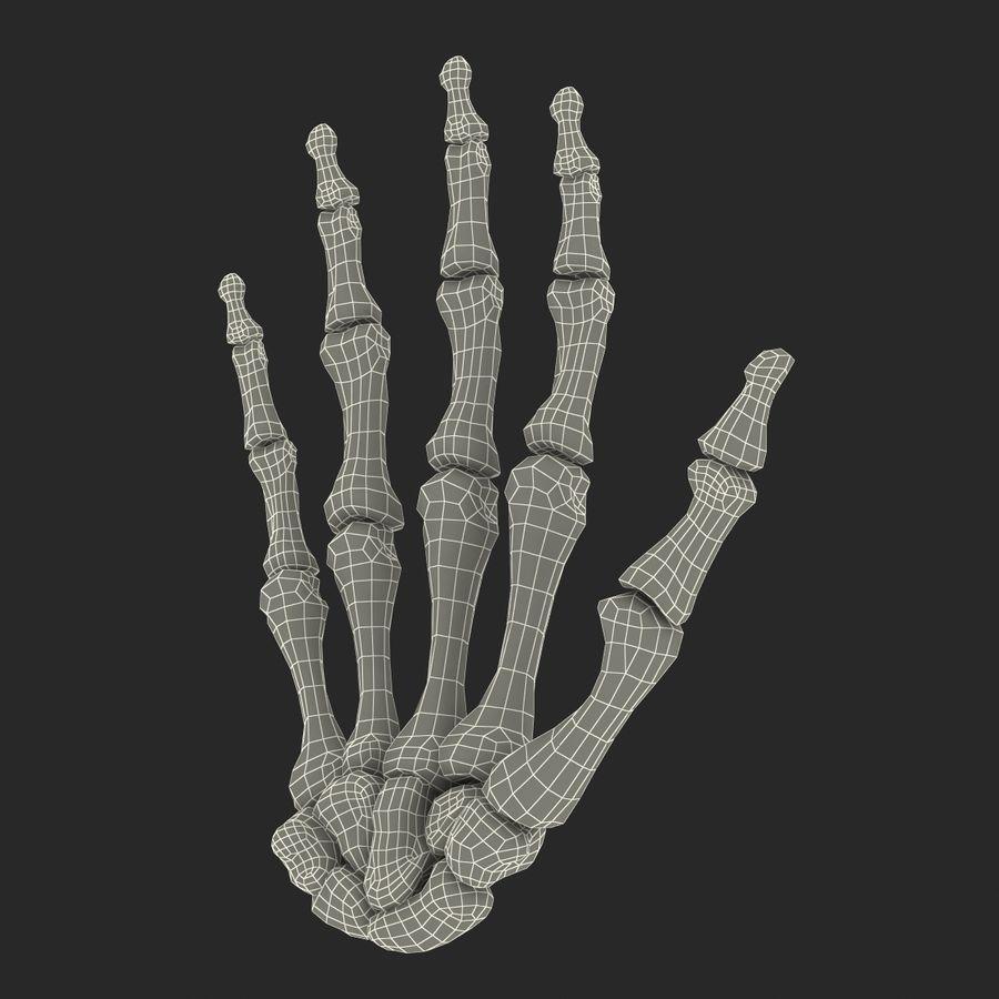 Human Hand Bones royalty-free 3d model - Preview no. 18