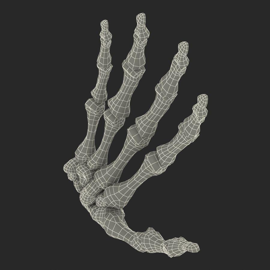 Human Hand Bones royalty-free 3d model - Preview no. 20