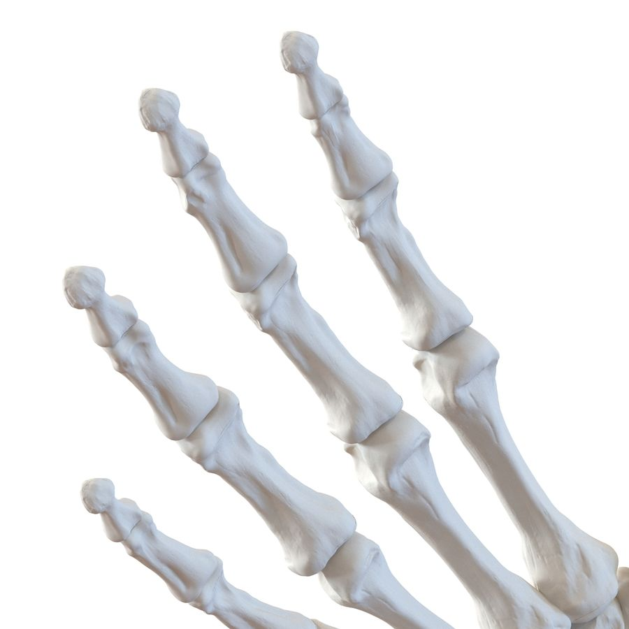 Human Hand Bones royalty-free 3d model - Preview no. 10