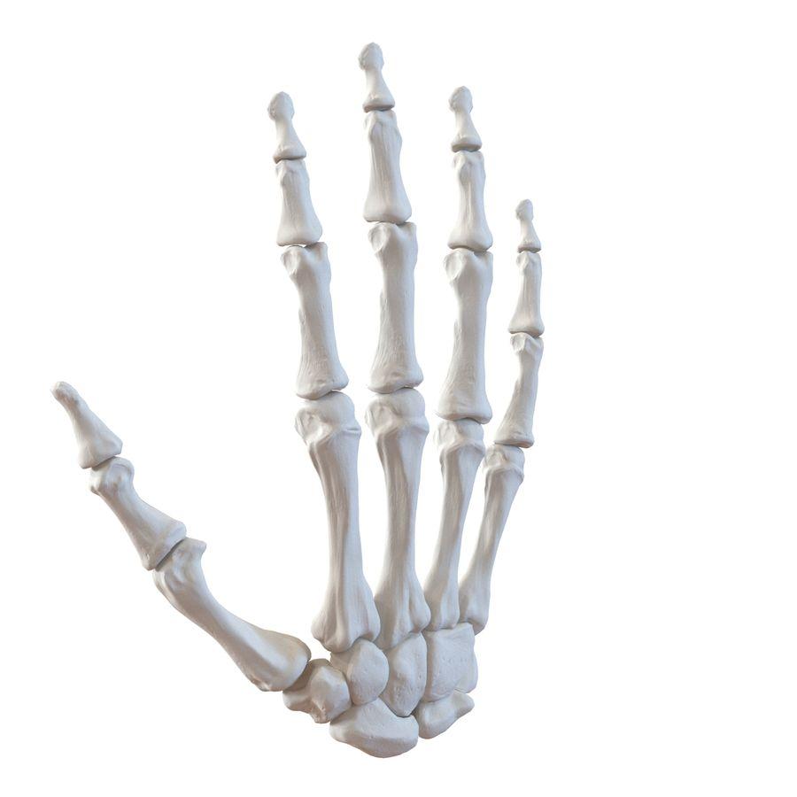 Human Hand Bones royalty-free 3d model - Preview no. 4