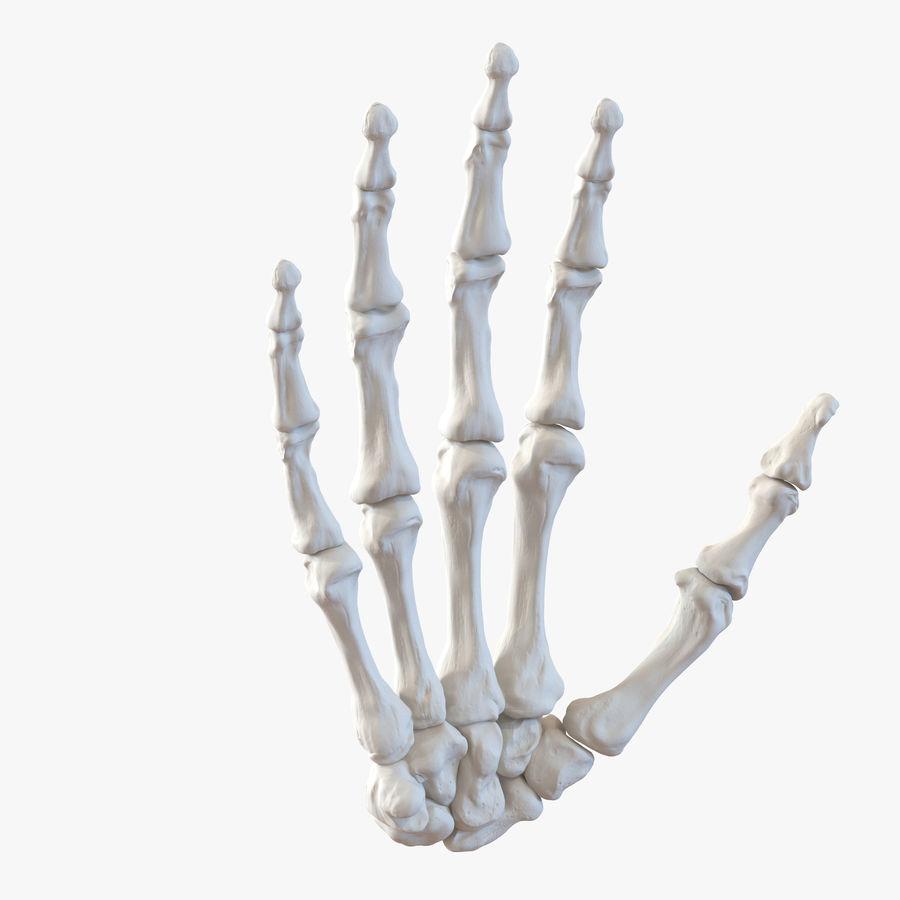 Human Hand Bones royalty-free 3d model - Preview no. 1