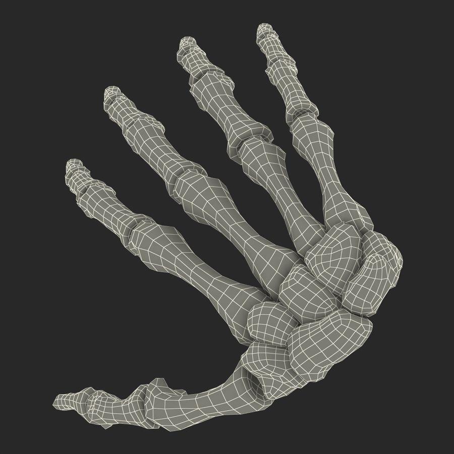 Human Hand Bones royalty-free 3d model - Preview no. 21