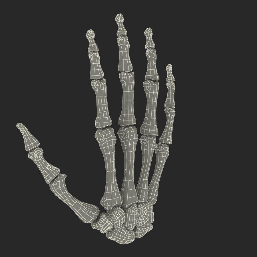 Human Hand Bones royalty-free 3d model - Preview no. 19