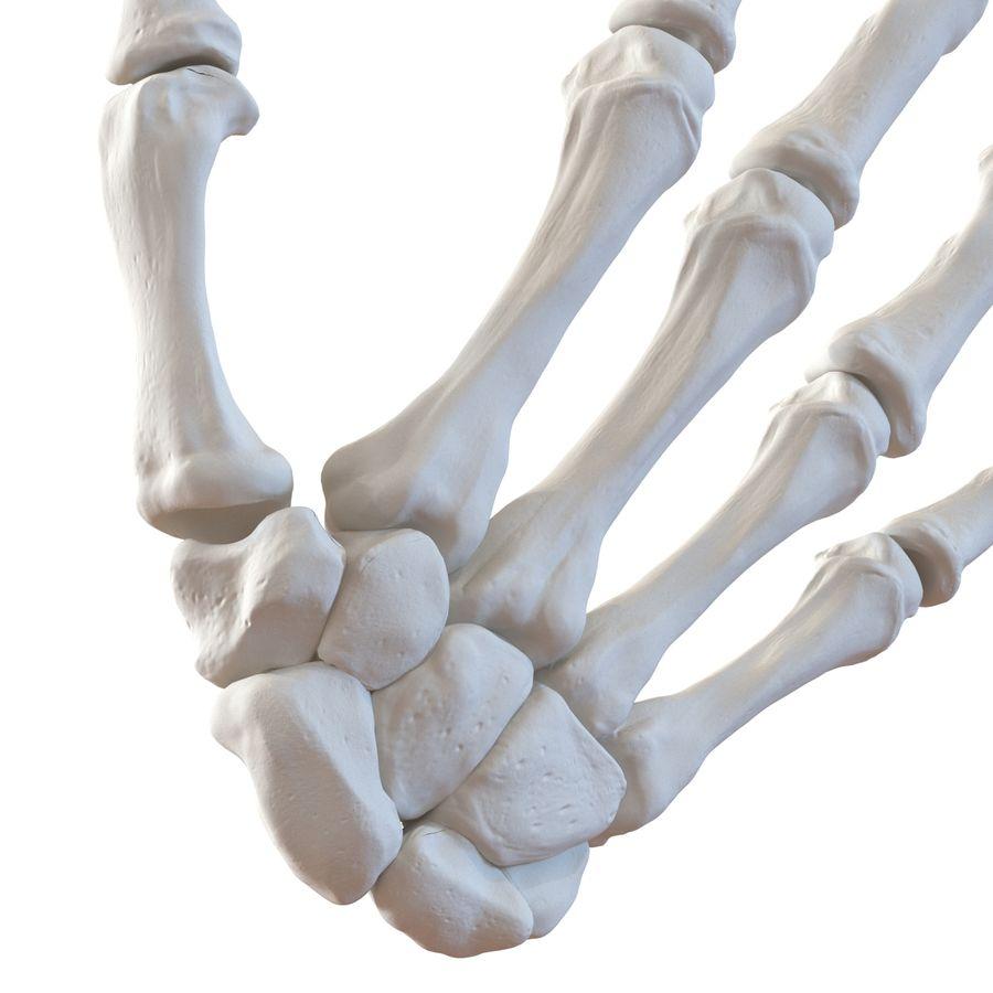 Human Hand Bones royalty-free 3d model - Preview no. 12