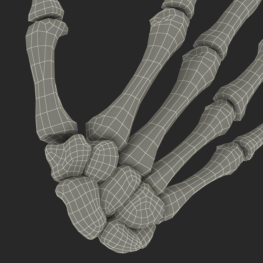 Human Hand Bones royalty-free 3d model - Preview no. 23