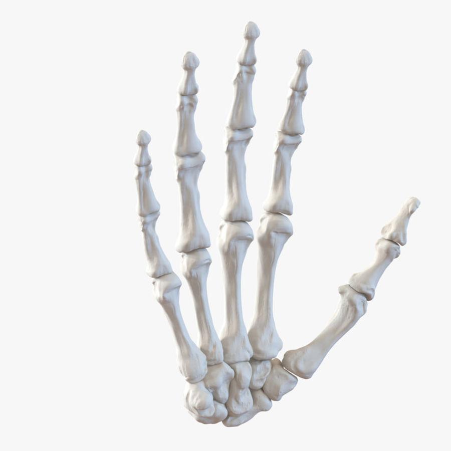 Human Hand Bones 3d Model  49