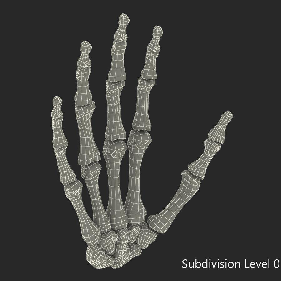 Human Hand Bones royalty-free 3d model - Preview no. 13
