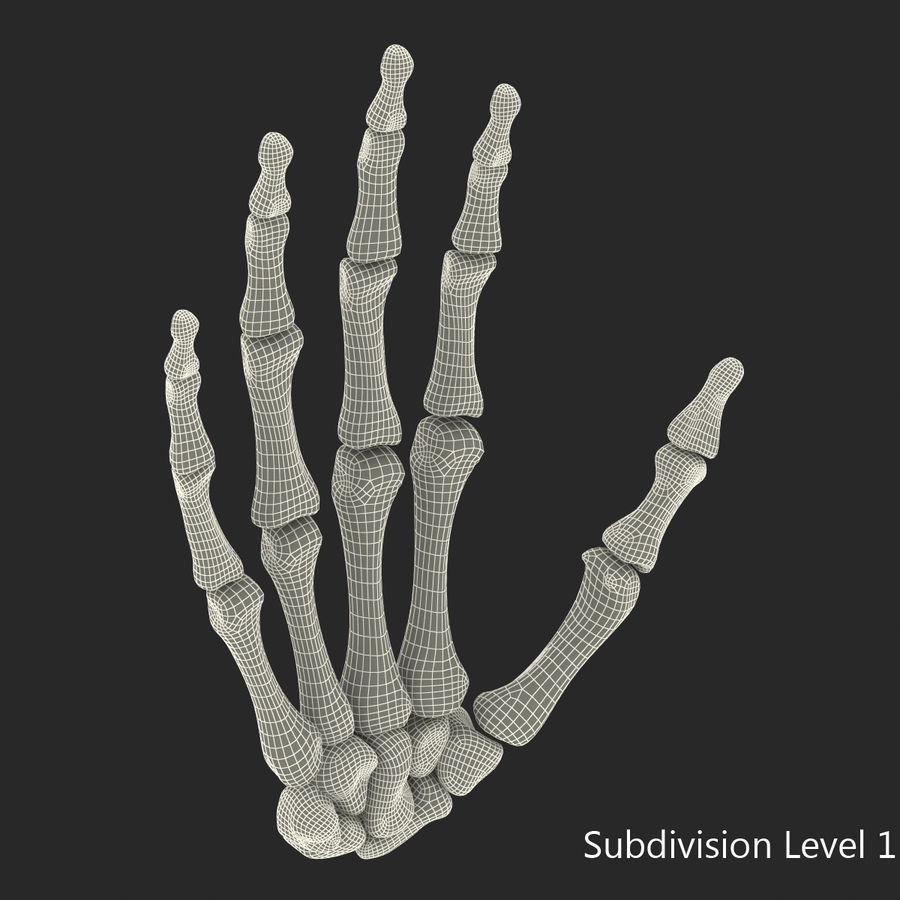 Human Hand Bones royalty-free 3d model - Preview no. 14