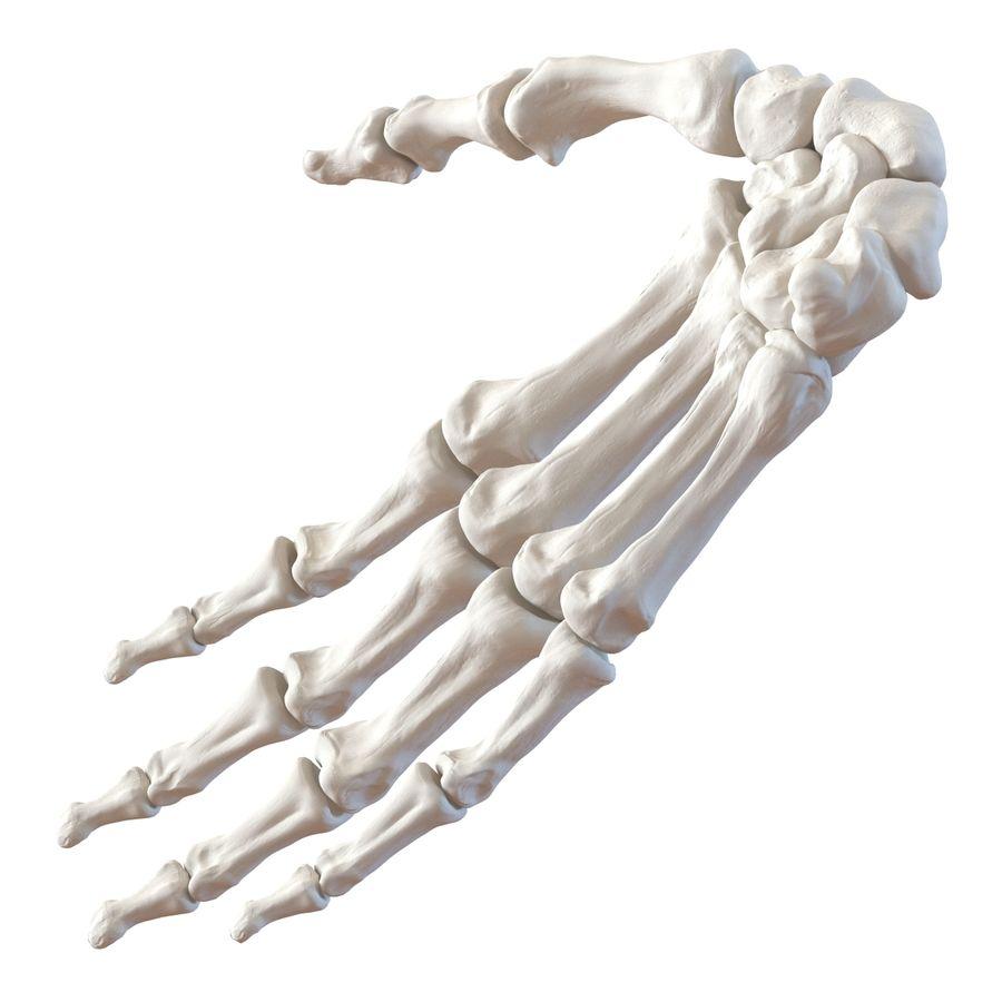 Human Hand Bones royalty-free 3d model - Preview no. 8