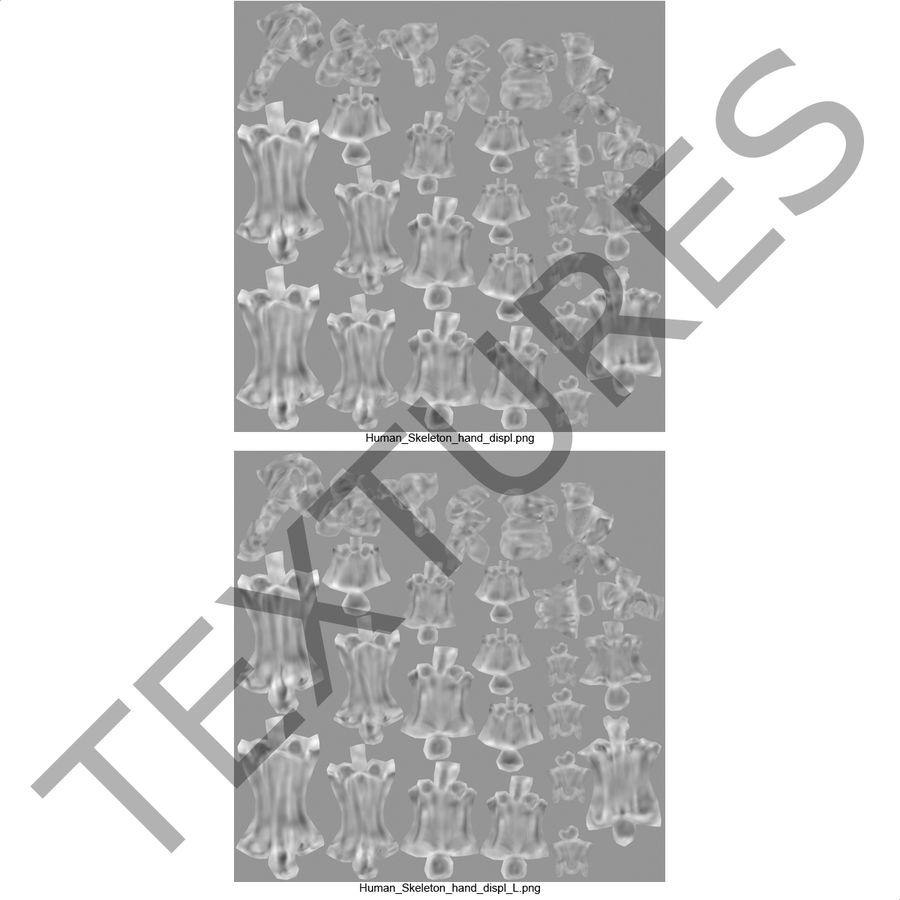 Human Hand Bones royalty-free 3d model - Preview no. 16