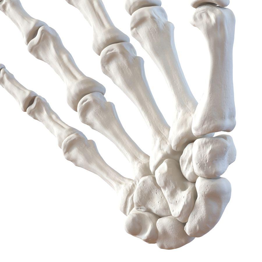 Human Hand Bones royalty-free 3d model - Preview no. 9