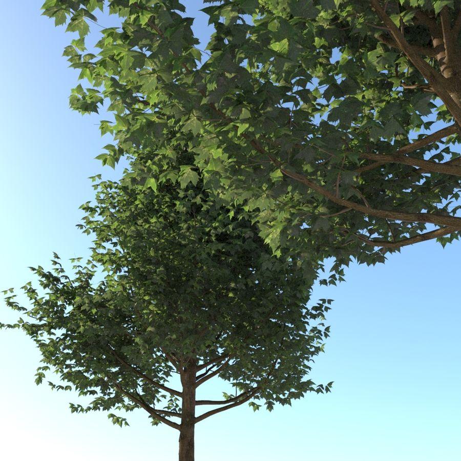 Vero albero architettonico royalty-free 3d model - Preview no. 6