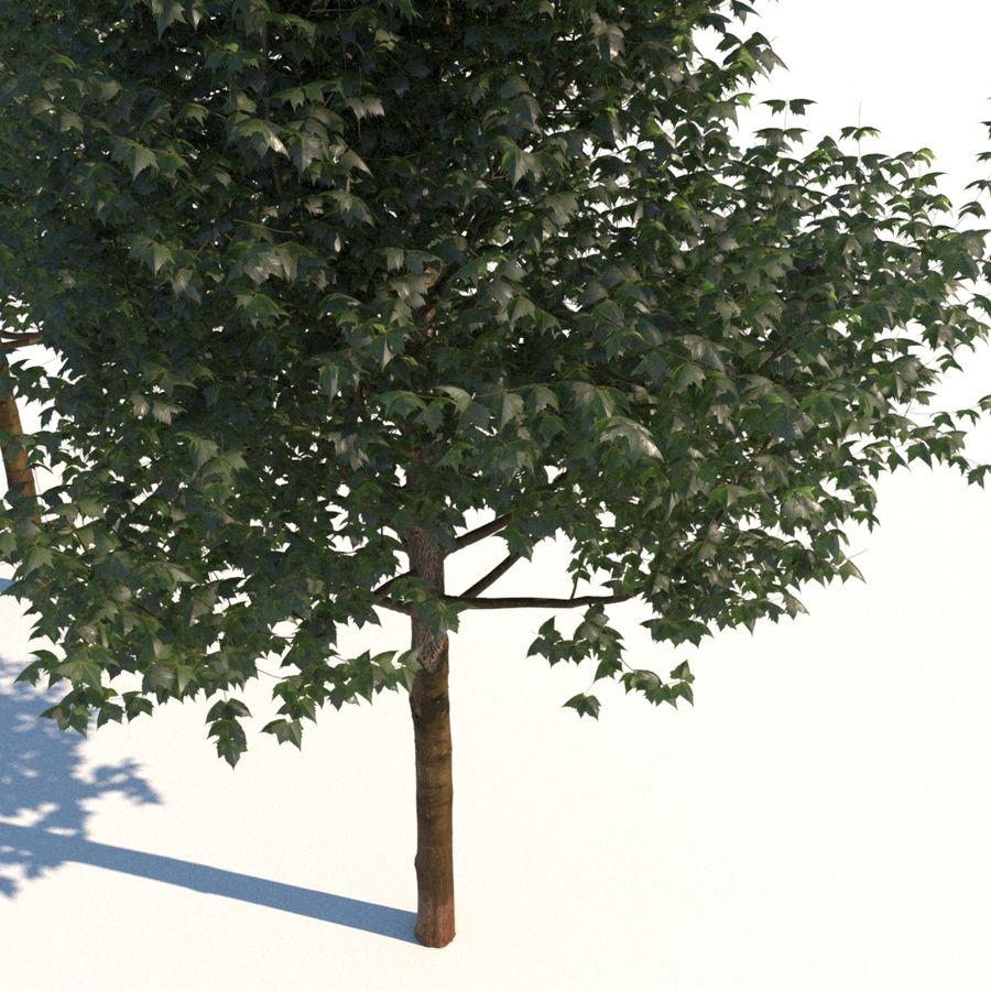 Vero albero architettonico royalty-free 3d model - Preview no. 5