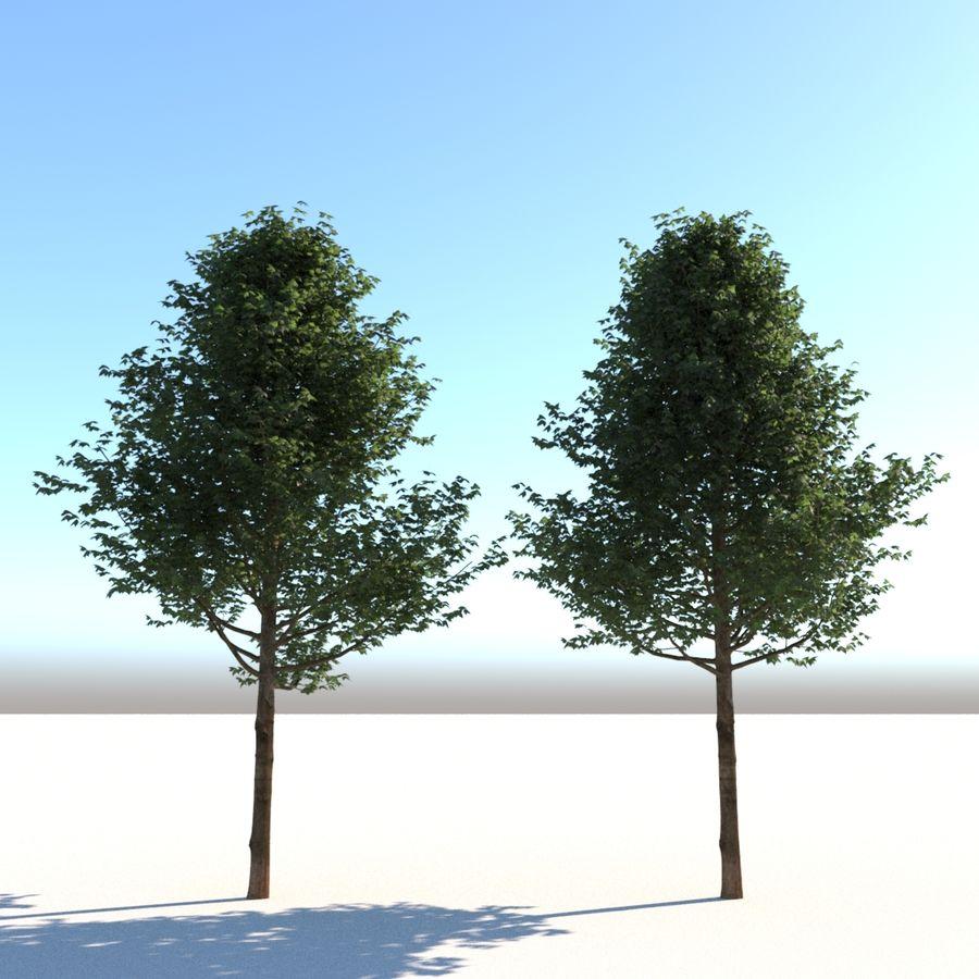 Vero albero architettonico royalty-free 3d model - Preview no. 2