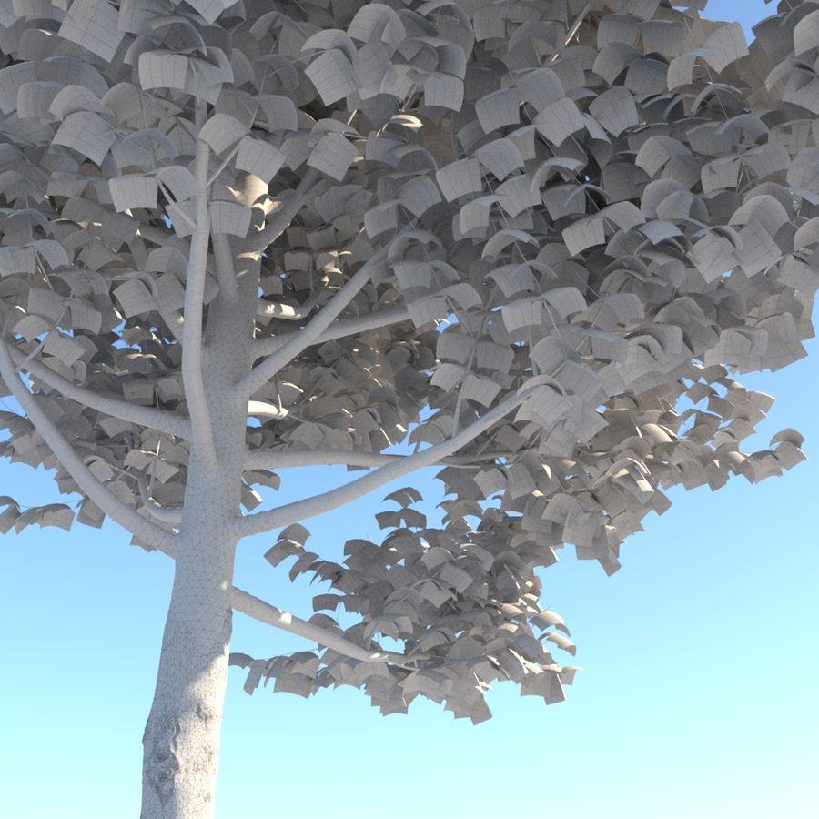 Vero albero architettonico royalty-free 3d model - Preview no. 8