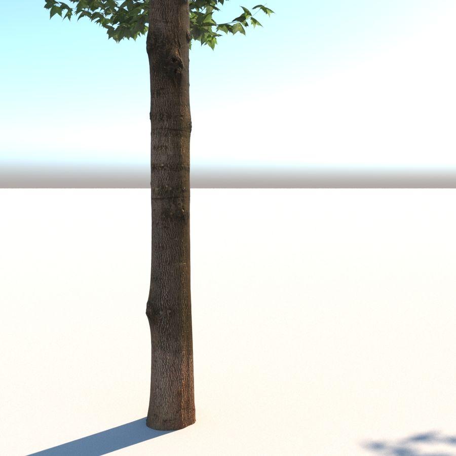 Vero albero architettonico royalty-free 3d model - Preview no. 3