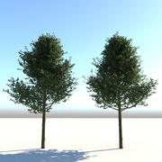 Real Architectural Tree 3d model