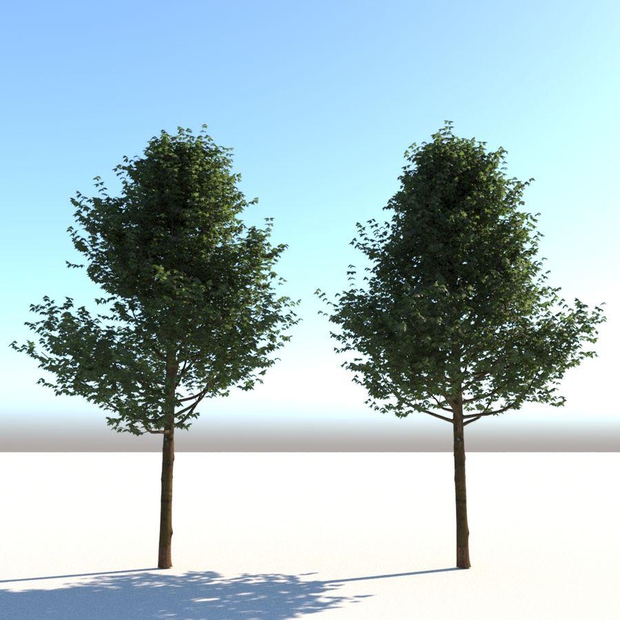 Vero albero architettonico royalty-free 3d model - Preview no. 1