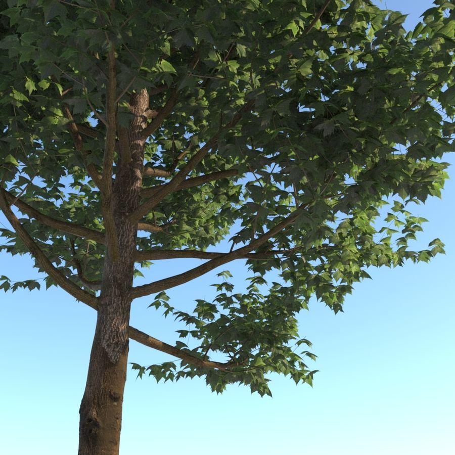 Vero albero architettonico royalty-free 3d model - Preview no. 4