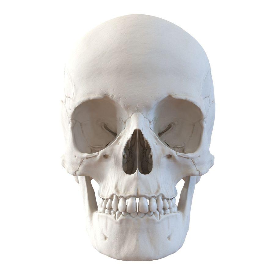 Female Human Skull Replica | Etsy  |Female Human Skull
