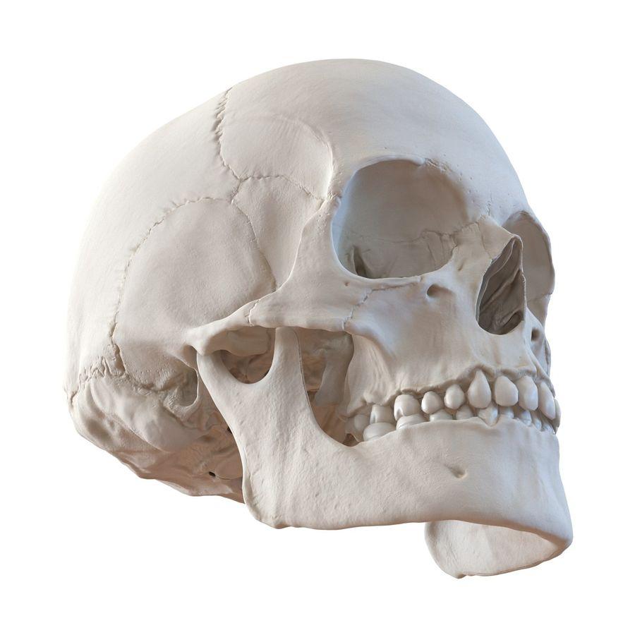 Female Human Skull 3D Model $49 - .ma .max .fbx .c4d .obj ...  |Female Human Skull