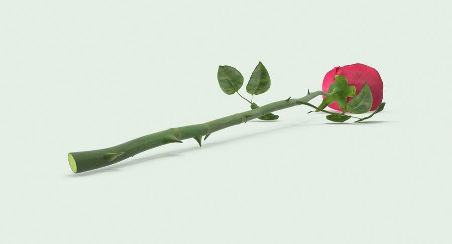 Poniendo rosa royalty-free modelo 3d - Preview no. 7