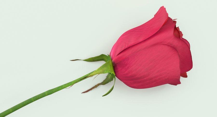 Poniendo rosa royalty-free modelo 3d - Preview no. 9
