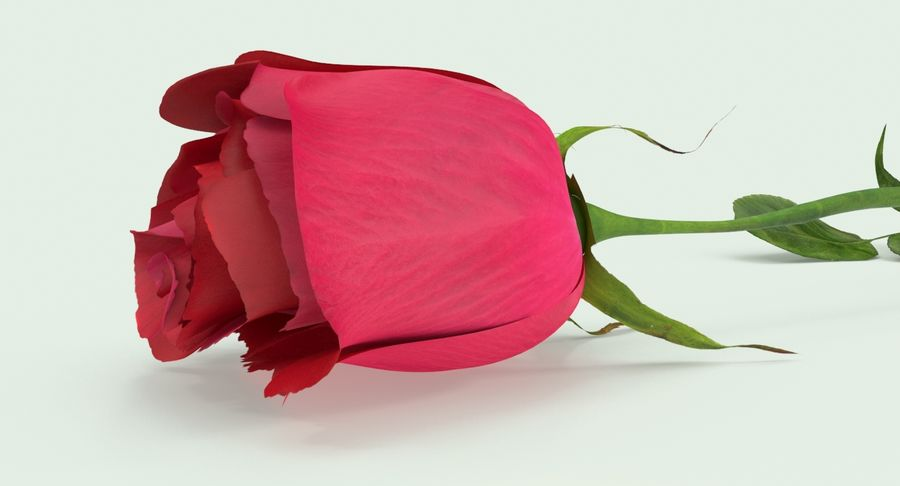 Poniendo rosa royalty-free modelo 3d - Preview no. 10