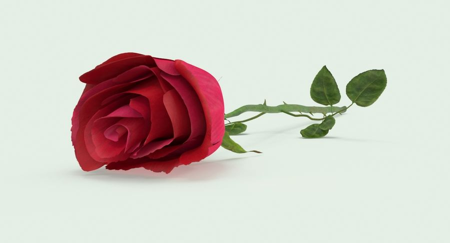 Poniendo rosa royalty-free modelo 3d - Preview no. 3