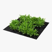 정원의 밤색 식물 3d model