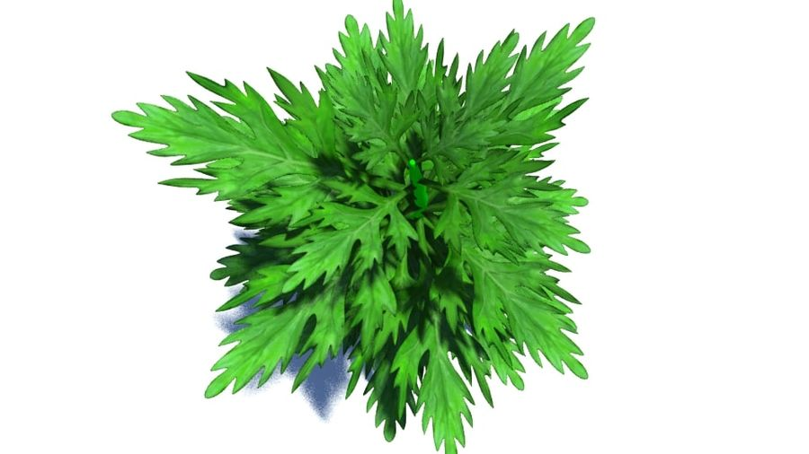 Herb Plant royalty-free 3d model - Preview no. 3