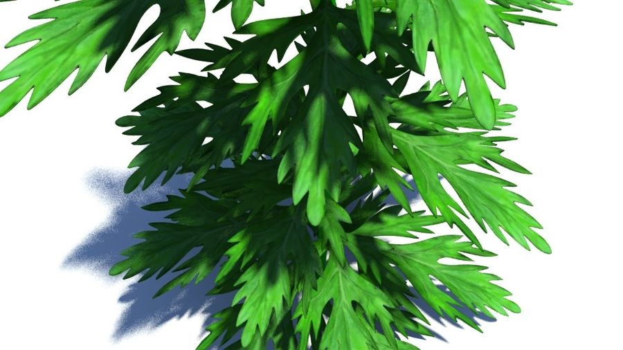 Herb Plant royalty-free 3d model - Preview no. 2