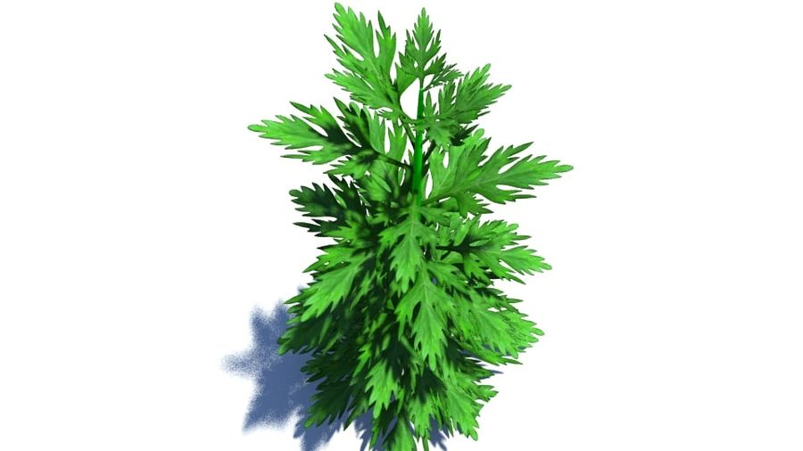 Herb Plant royalty-free 3d model - Preview no. 1