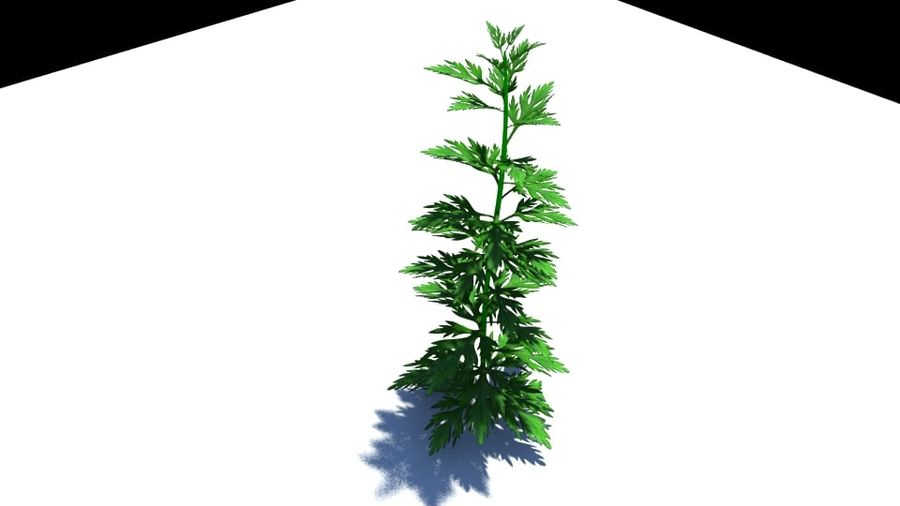 Herb Plant royalty-free 3d model - Preview no. 5