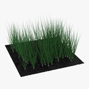 Young Onion Plants in the Garden 3D Model 3d model