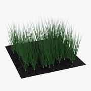Young Onion Plants in the Garden Modèle 3D 3d model