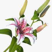lily pink_v_2 3d model