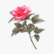 rose pink_v_3 3d model