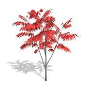 Сумак маленькое дерево (красное) 3d model