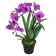 Pink Orchid 3d model