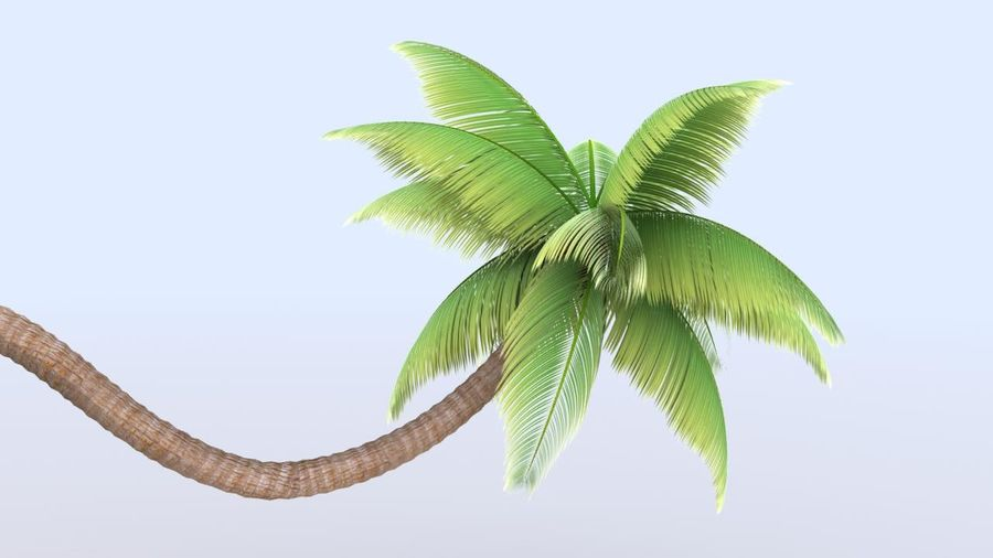 Beach Palm Tree royalty-free 3d model - Preview no. 3